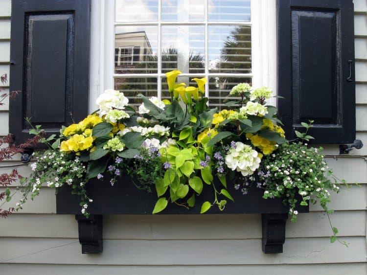 window-planters