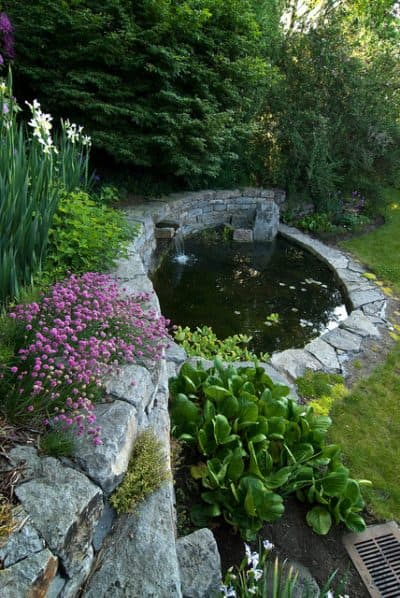 small-backyard-pond