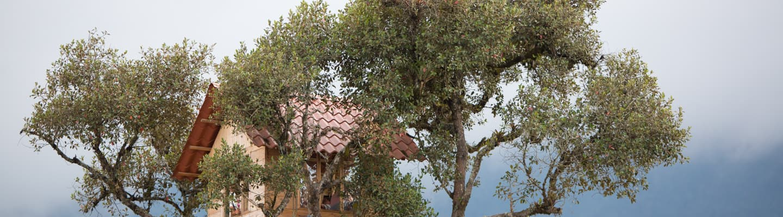 Safe Tree House Designs Ideas Salter Spiral Stair
